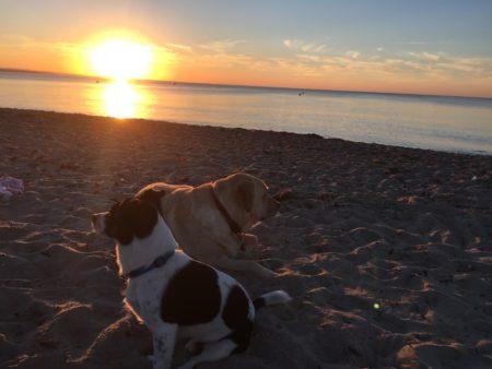 Sonnenuntergang und Hunde - Jan Göritz - Heilpraktiker für Psychotherapie und Psychologischer Berater in Hamburg